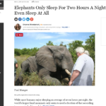 elephants sleep